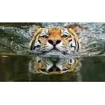 Как украсить елку в 2022 году Черного водяного тигра